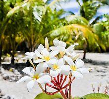 Tahiti Beach Plumeria by Angelina Hills