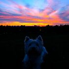 Brody at sunset by MarianBendeth