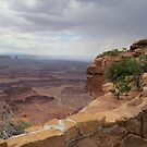 Dead Horse Point (W) - Canyonlands, UT by dolphinandcow