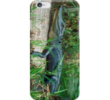 Young Alligator  iPhone Case/Skin