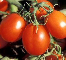 Red Tomatoes  by BravuraMedia