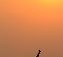 Giraffe Solitude of Gold - African Wildlife by LivingWild