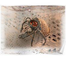 Goggo/Insect range - Hermit Crab Poster