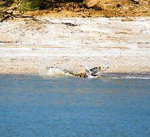 Saltwater Crocodile Eating 5/6 by Romandar