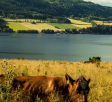 Norwegian Cow  Sticker