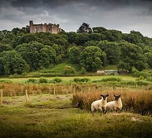 Sheep at Weobley castle by leightoncollins