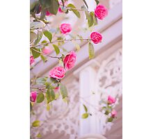 Pink Camellia Photographic Print