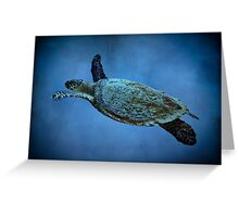 Turtle in the blue Greeting Card