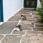IT'S A ........ CAT'S LIFE.. !! by vaggypar