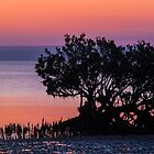 Mangrove at Sunset. by Bette Devine