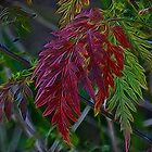 Changing colors by vigor