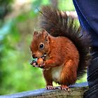 Squirrel has found a tasty nut to eat ............. by lynn carter