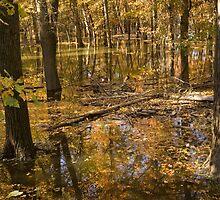 Autumn Trees Near a Lake by BravuraMedia
