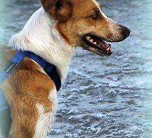 dog at lake by spetenfia