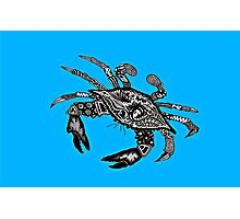 Maryland Blue Crab Photographic Print