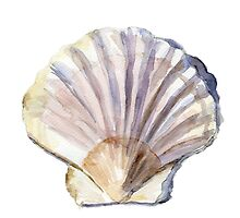 Shell watercolor Zen painting by Zendrawing