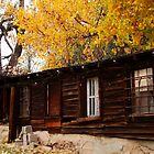 Acre 7 - Aspen Tree in Fall with Abandoned Out Building Original Photograph by Jeanine Molnar