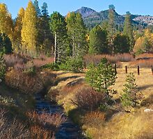 Fall in the Sierras by Barbara  Brown