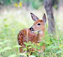 Once upon a Fawn by Jim Cumming