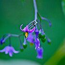 Lovely little vine!!!! by Carolyn Clark
