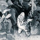 Garden kitten by Lynn Starner