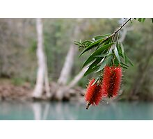 Bottlebrush, Stony Creek, Byfield NP.  Photographic Print