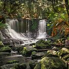 Falls and Ferns by TonyCrehan