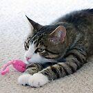 Cat & Mouse by Susan S. Kline