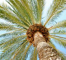 Palm tree by SIR13