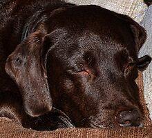 Dog Tired by lynn carter