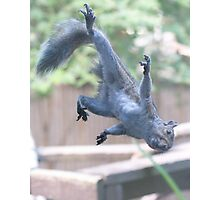 Henry, the Flying Squirrel Photographic Print