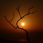 Evening Branch (Original) by Vicki Spindler (VHS Photography)