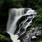 Triberg Waterfalls by Angelika  Vogel