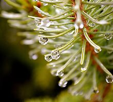 Raindrops by dmacneil