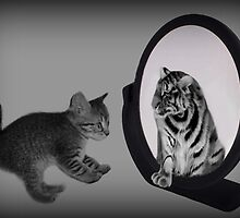 ㋡ MIRROR OF TRUTH WHAT DO I SEE? I SEE THE REAL TIGER IN ME ㋡ PICTURE/CARD by ✿✿ Bonita ✿✿ ђєℓℓσ