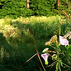 Wildflowers & Grasses At Sunrise background by Geno Rugh