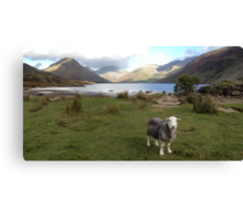 Wast Water with a Herdwick Sheep Canvas Print