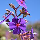 Beautiful purple flowers in blue sky. photo taken at Getty Art Centre in LA, California. by naturematters