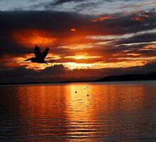 Sunset Pelican on the Bay by lizwilsonphotog