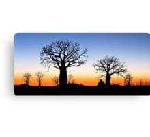 Boab Silhouettes (Panorama) Canvas Print