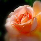 Orange Romance by Lozzar Flowers & Art