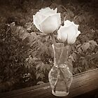 Sepia Roses by Barbny