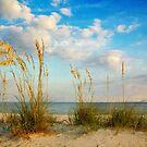 Sea Oats  by Jonicool