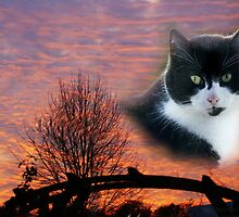 Sky Cat by Gilberte