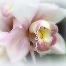 Soft Orchid by Elaine Bawden