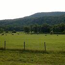 Grazing In An Open Field by Sean Paulson