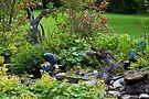 Pond Scene  by Sandra Foster