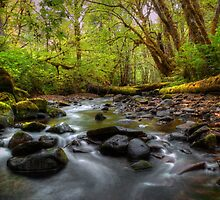 Let It Flow ~ Whittaker Creek ~ by Charles & Patricia   Harkins ~ Picture Oregon
