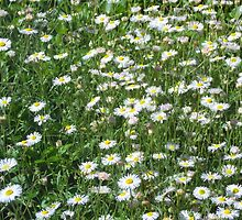 Wild Flowers by farrahbear