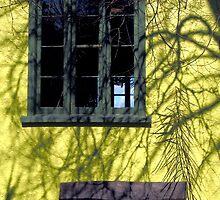 Dapple on yellow by Duncan Cunningham